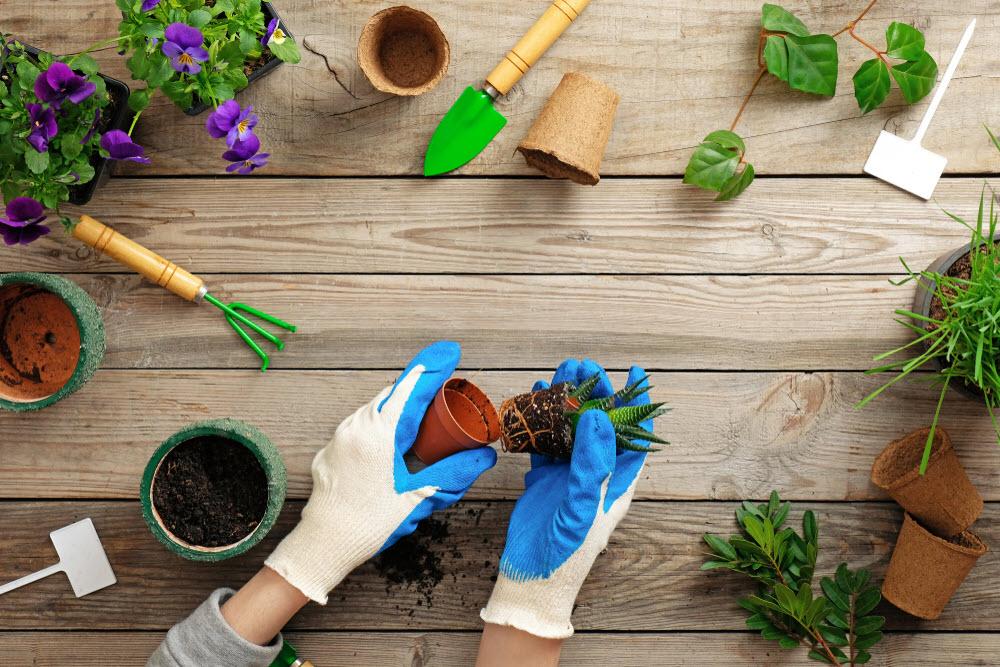 my hobby gardening